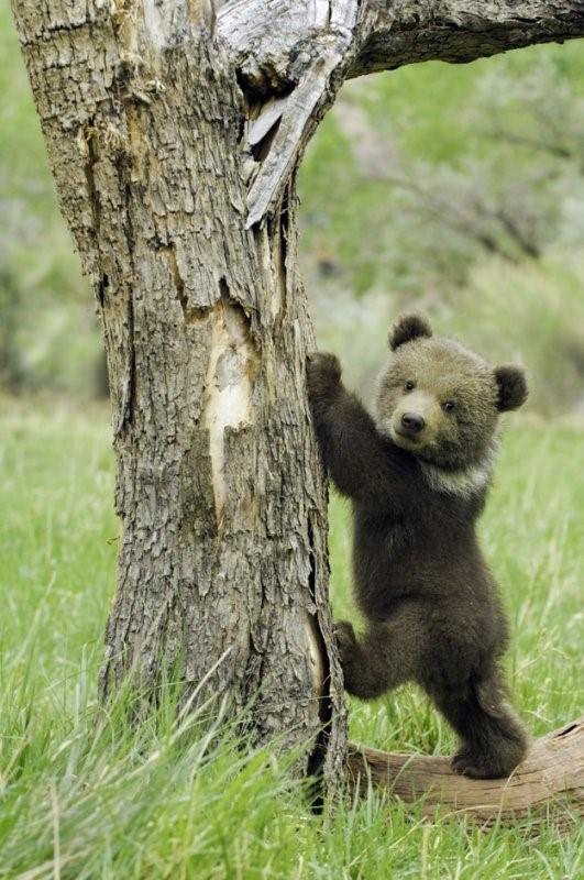 在戶外遇到山獅或熊應該怎麼辦?