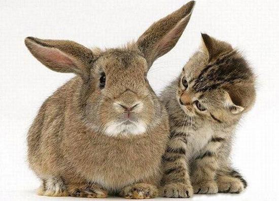BC SPCA 半價領養貓咪和兔子優惠