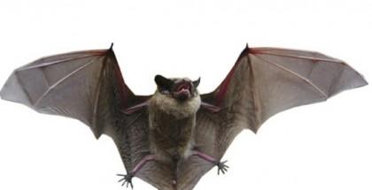 溫市蝙蝠攜狂犬病毒