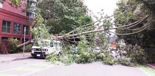 强风吹袭大温地区!仍有四万多人未恢复供电!