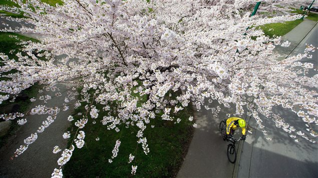PC_170330_f86y8_rci-blossombike_sn635